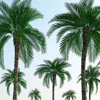 Low Polygon Palm Tree