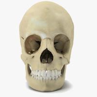 skull parts scan max