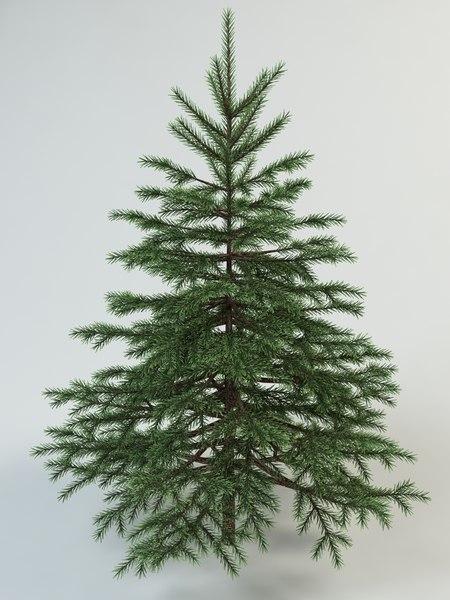 fir spruce 3d max
