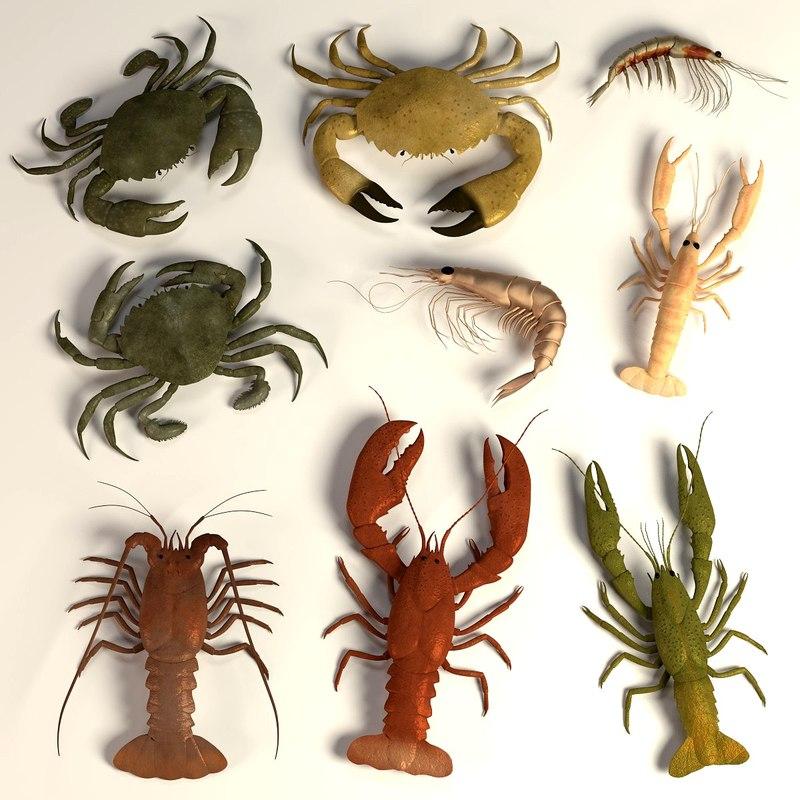 3d crustacean crabs lobster model