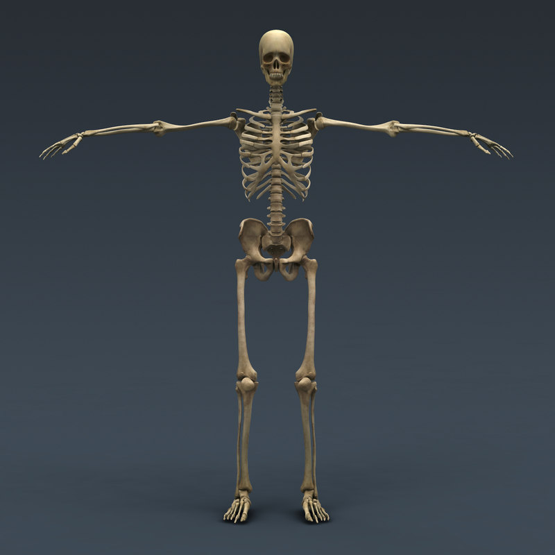 Human Skeleton Maya Rigged