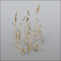 Dry Reed Grass Bundle1