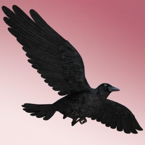 crow wings flying max