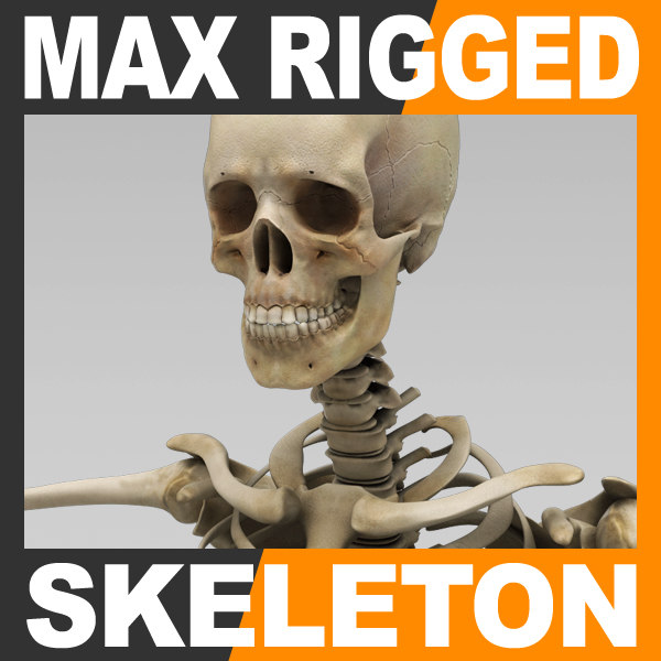max human skeleton rigged male man