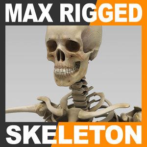 max human skeleton rigged male man