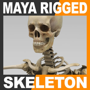 human skeleton rigged male man 3d model