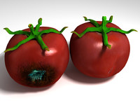3d decayed rotten tomato stalk