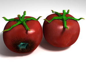 3d decayed rotten tomato stalk