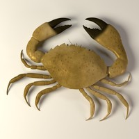 3d model crab menippe mercenaria