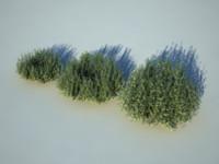 Pine_bush