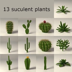 max cactuses suculents
