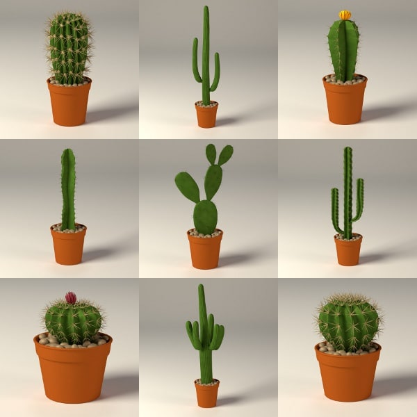 3d model cactus pot