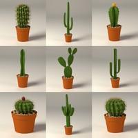 cactus+pots
