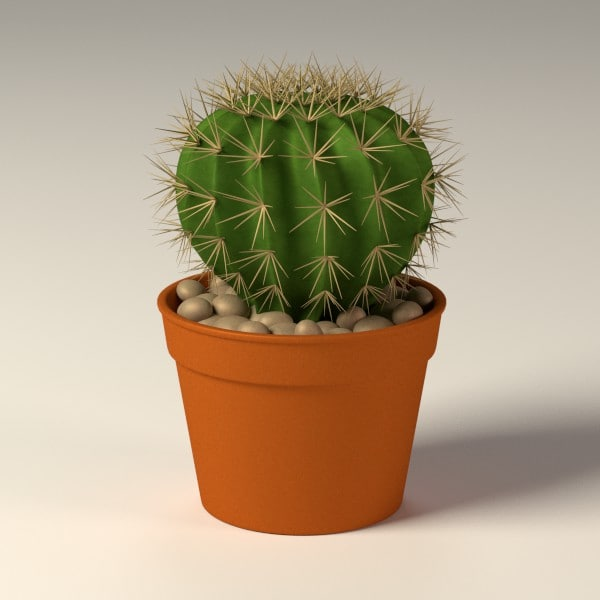 3d model of cactus pot. Black Bedroom Furniture Sets. Home Design Ideas