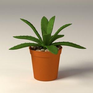 suculent pot 3d model