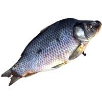 3d carp fish model