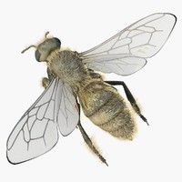 3d model of worker bees