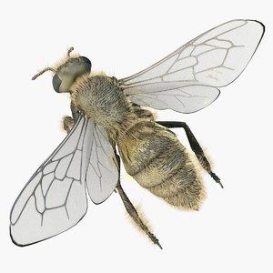 3d model of worker bees
