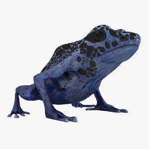 blue poison dart frog lwo
