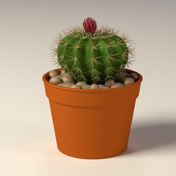 Max cactus pot Cactus pots for sale