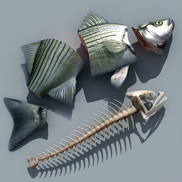 3d cutted fish model