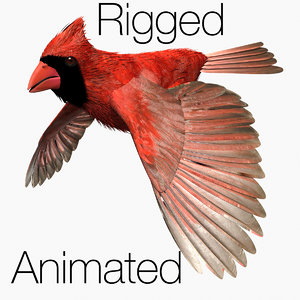 cardinal bird flight lightwave male 3d model