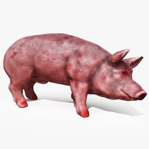3d pig animating model