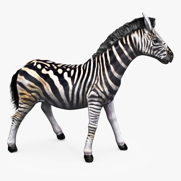 zebra animating 3d model
