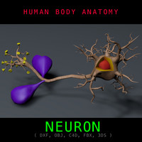 Neuron Anatomy Textured