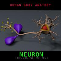 c4d neuron anatomy