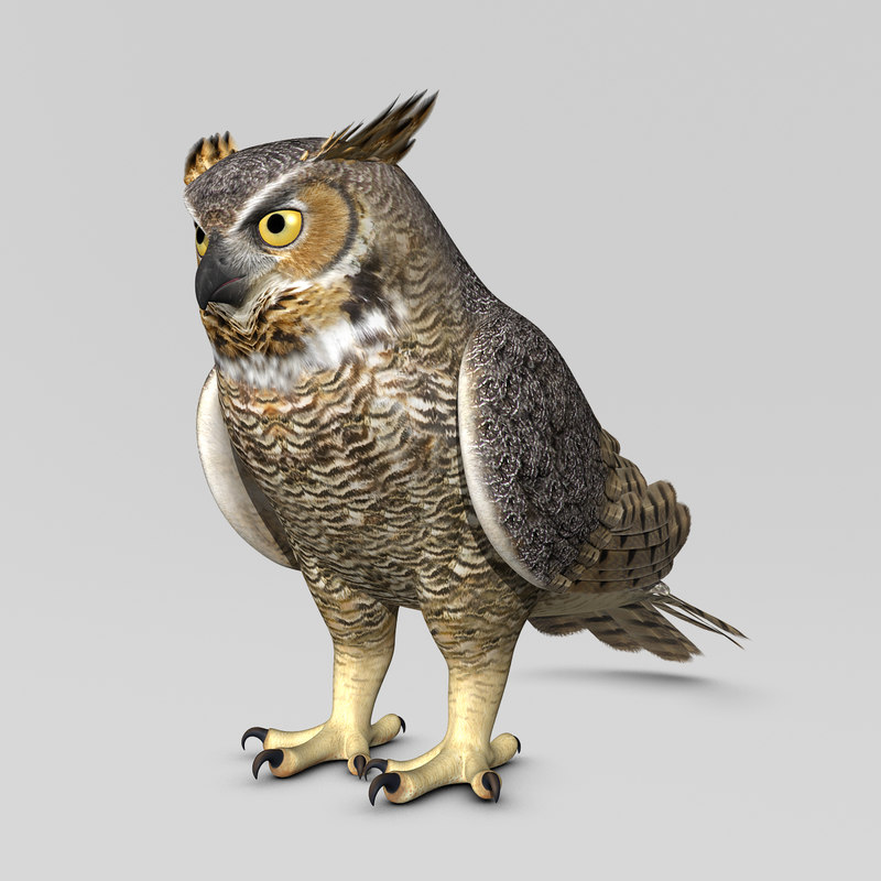 3ds max great horned owl folded