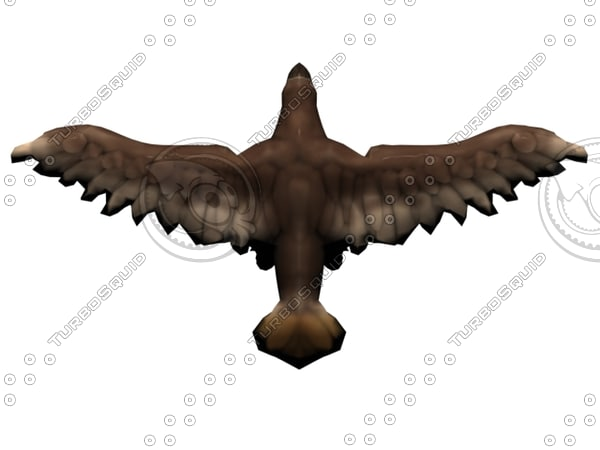 hawk wings 3d obj
