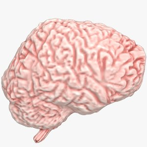 3ds max human brain