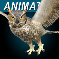 Great Horned Owl ( Flying )