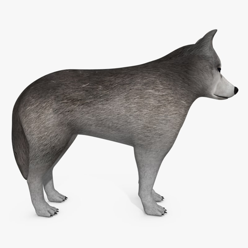 3d wolf dog