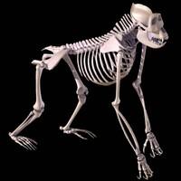 gorilla skeleton obj