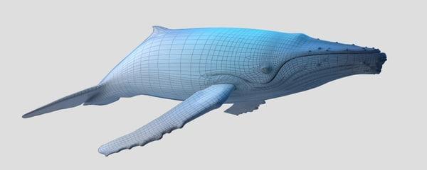 3d humpback whale