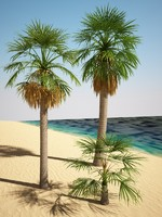 3d model washingtonia palm