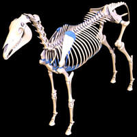 horse skeleton 3d 3ds