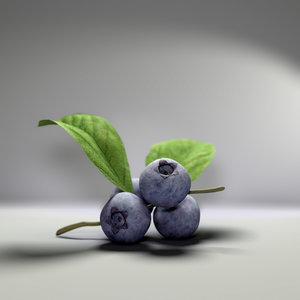 3d blueberry berry