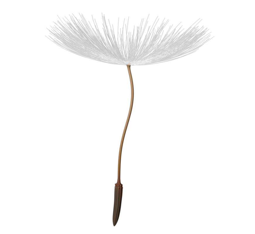 dandelion leaf 3d obj