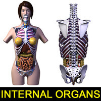Internal organs, Body, Skeleton