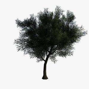 max ready tree generated