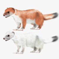 white ermine red 3d model