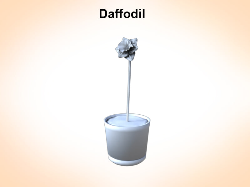 3d narcissus daffodil model