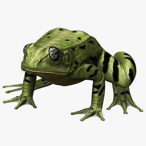 3d model frog modelled
