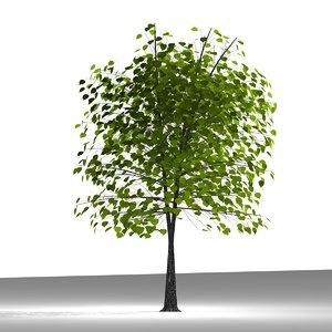 3d model of plane tree