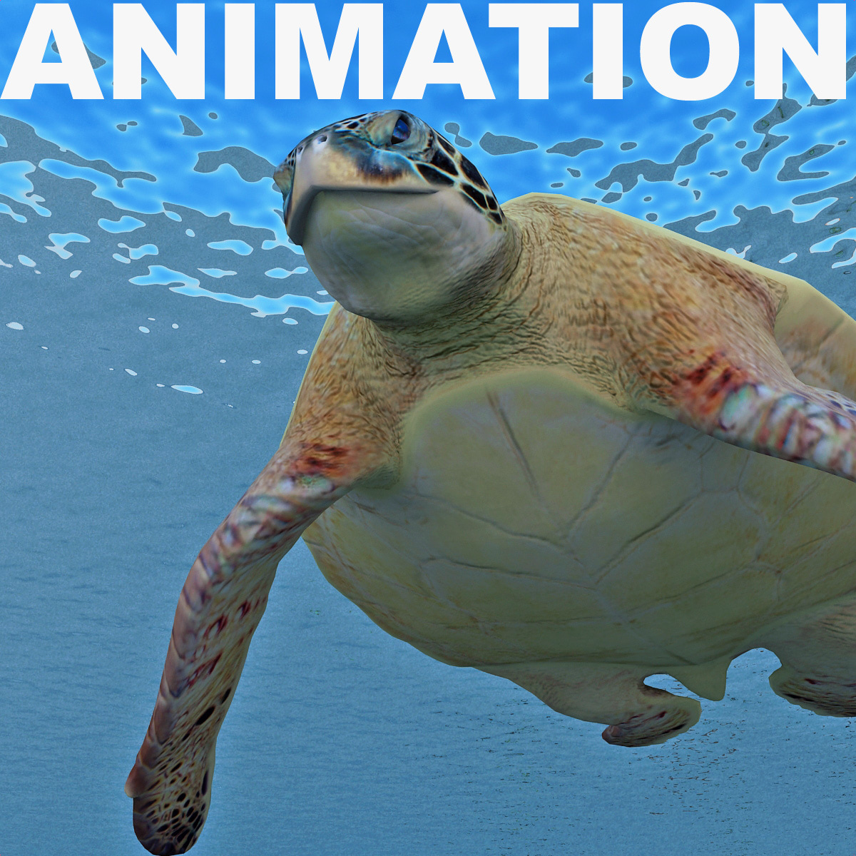 3d model of turtle chelonia mydas