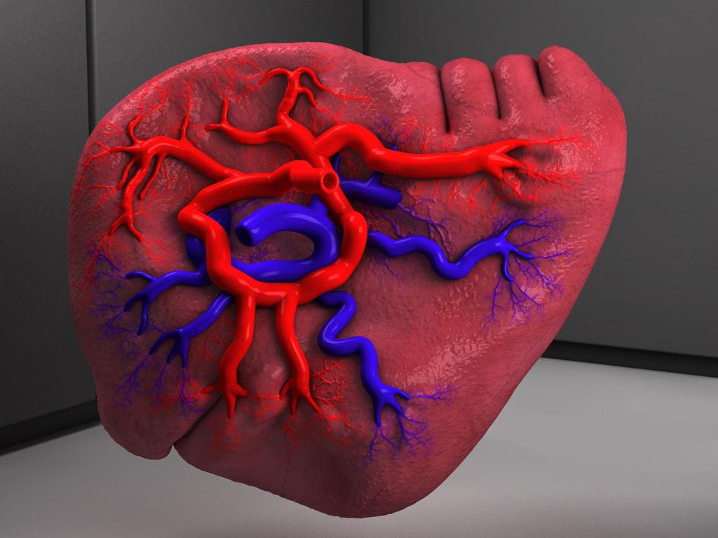 Obj Human Spleen