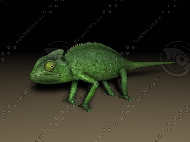 chameleon animation 3d model